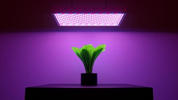 Salada verde sob luz led