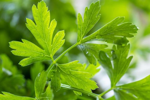 Salsa. salsa verde close-up. fundo macro de salsa fresca.
