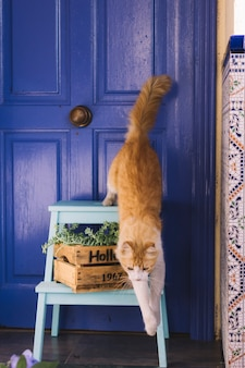 Saltar gato