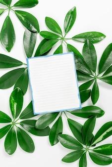 Salvando idéias ambientais, criando produtos sustentáveis, materiais orgânicos, projetos de jardinagem