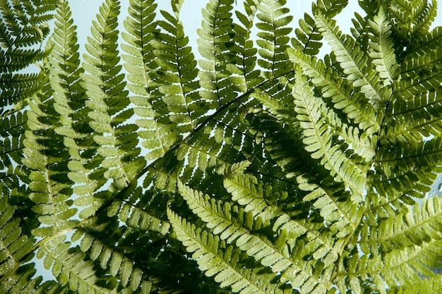 Samambaia de perto. imagem monocromática verde