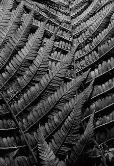 Samambaia deixa close-up. foto em preto e branco. monocromático. papel de parede