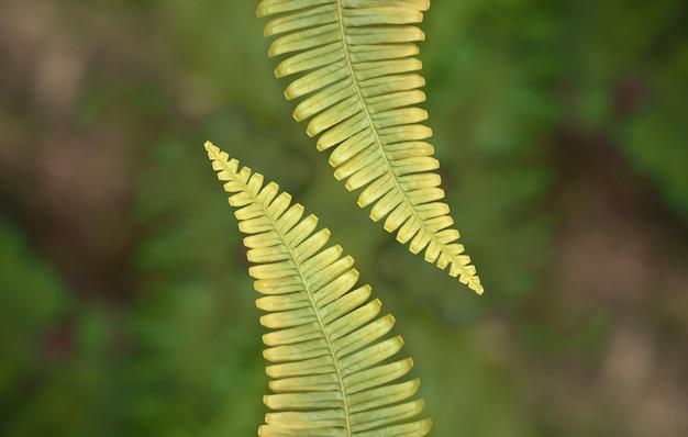 Samambaia verde deixar primavera natureza papel de parede plano de fundo