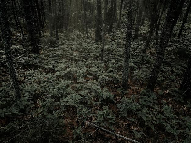 Samambaias crescendo na floresta densa