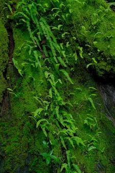 Samambaias e musgo na base de uma árvore na floresta tropical
