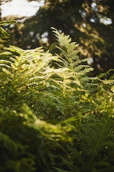 Samambaias na floresta à luz do sol à noite. fundo botânico