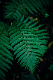 Samambaias na floresta