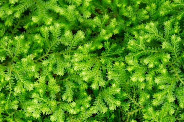 Samambaias ou musgos na floresta