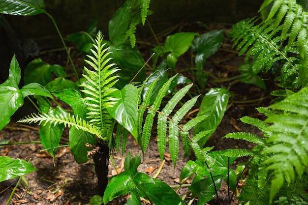 Samambaias verdes na floresta tropical