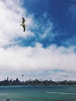 San francisco seagulls