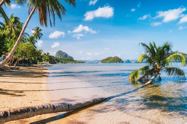 Sandy beach com palmeira caída na praia de corong, el nido, palawan, filipinas.