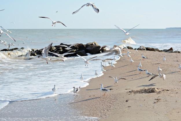 Sandy seashore com pedras e gaivotas.