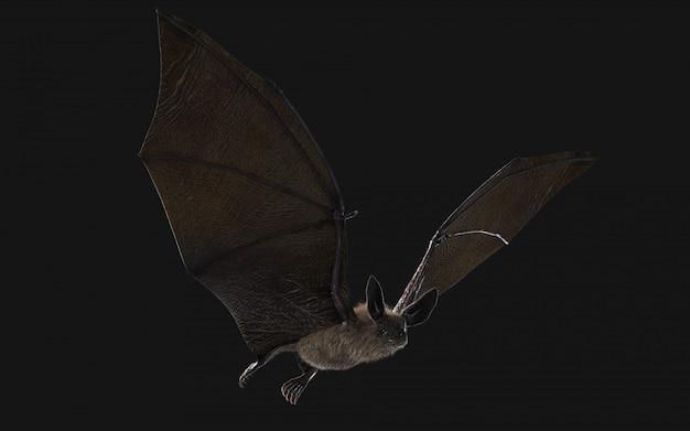 Sangue com sede morcego vampiro mergulhando no escuro