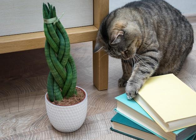 Sansevieria é cilíndrica em forma de rabo de cavalo, livros e gato.