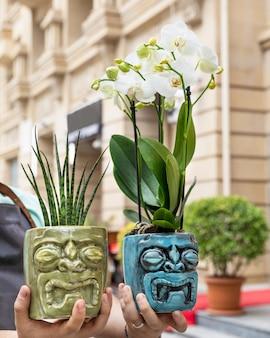 Sansevieria punk, pequena planta cobra, lírio da paz, spathiphyllum no vaso de cerâmica
