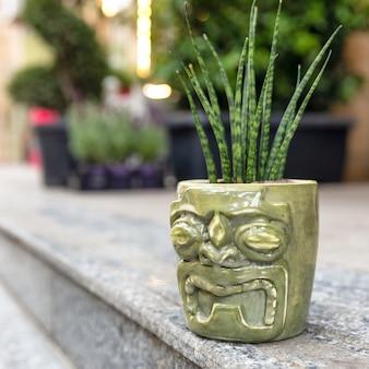 Sansevieria punk, pequena planta cobra no vaso de cerâmica