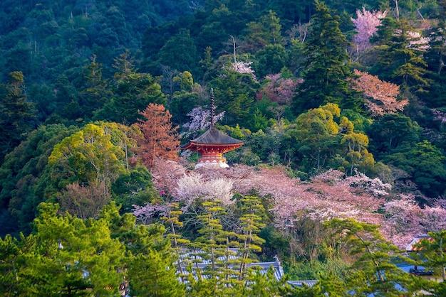 Santuário de itsukushima com sakura em miyajima, hiroshima, japão