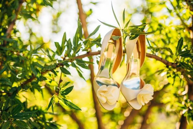 Sapatos de casamento da noiva pendurados no galho de uma oliveira
