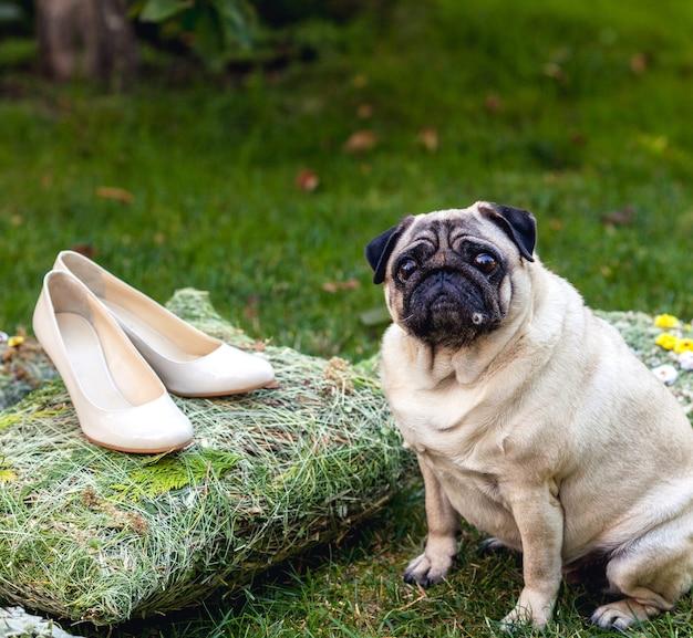 Sapatos de casamento para mulheres e pug bonito