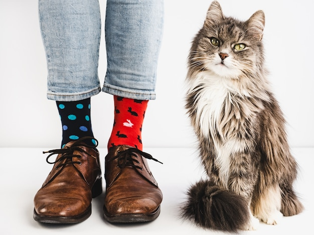 Sapatos elegantes, meias brilhantes e gatinho doce