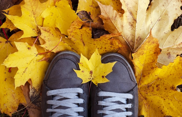Sapatos femininos em folhas amarelas. vista do topo
