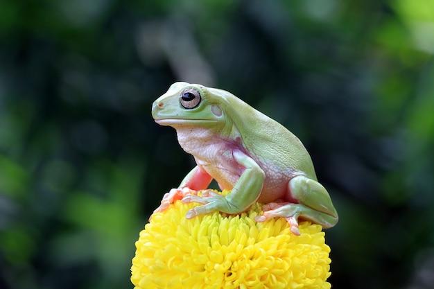 Sapo parvo sentado sobre uma flor verde