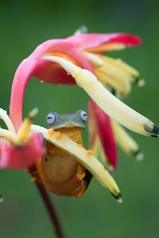 Sapo verde empoleirado nas pétalas de uma flor