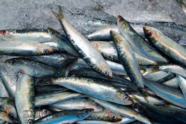 Sardinha peixe fresco marisco no mercado do mar de gelo