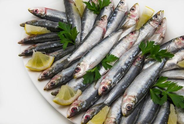 Sardinhas frescas