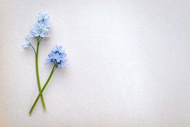 Saudação linda foto com pequenas flores azuis em um fundo de papel branco