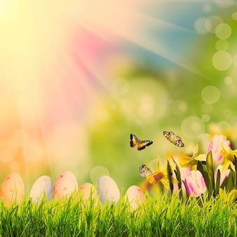Saudações de páscoa com grama sobre bokeh de primavera e luz do sol