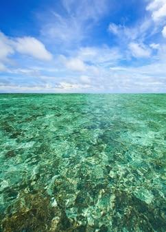 Scape coral no mar de andaman tailândia