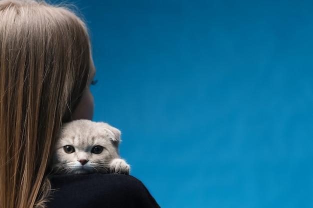 Scottish fold gato sentado no ombro da amante