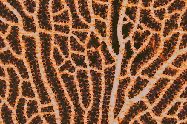 Seafan, textura, laranja