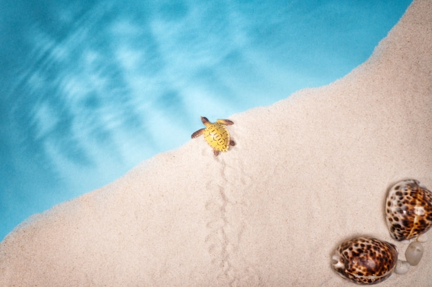 Seascape conchas areia, cartão postal de férias. animais marinhos.