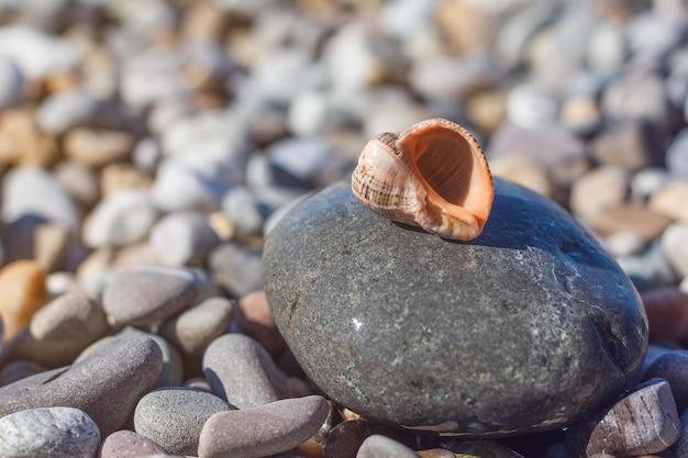 Seashell encontra-se em uma grande pedra na praia