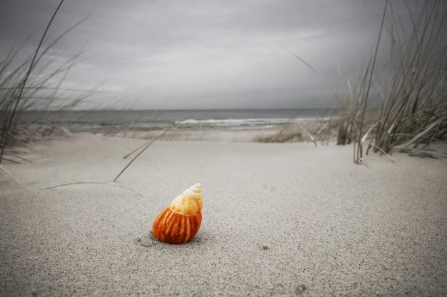 Seashell solitário na praia