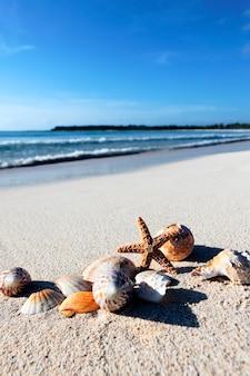 Seastar e conchas em uma praia do caribe
