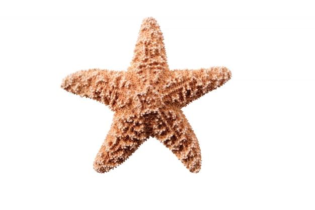 Seastar pequeno da estrela do mar isolado no fundo branco