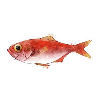 Sebastes, aquarela ilustração isolada de um peixe.