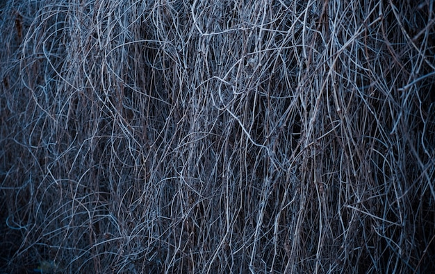 Sebe de fundo de natureza de ramos secos de videira