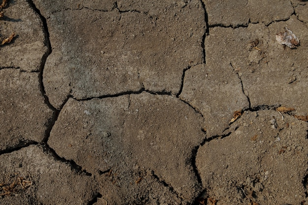 Seca. fundo seco do mar do rio lago. caranguejos mortos secam por causa da seca. solo seco fraturado da seca. conceito de seca, mudança climática, morte sem umidade. ecologia. catástrofe. misticismo rachado
