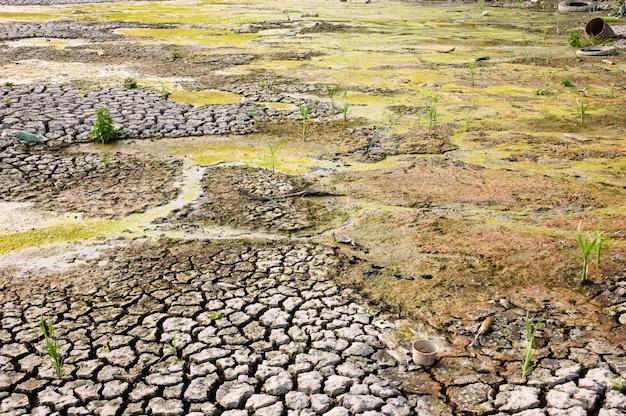 Secagem de terreno baldio sujo com superfície rachada devido ao aquecimento global