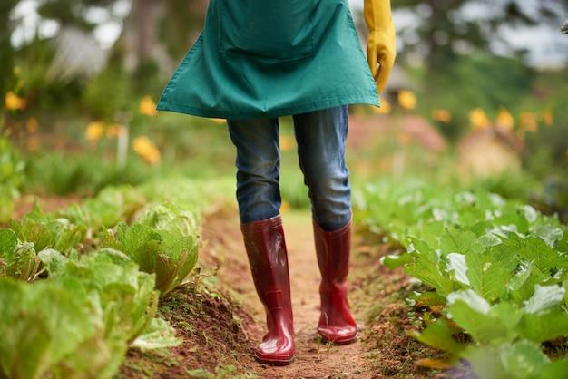 Seção baixa do agricultor anônimo em gumboots caminhando ao longo dos canteiros do jardim