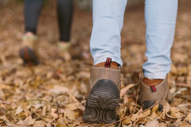 Seção baixa, vista, de, mulheres caminhando, em, floresta