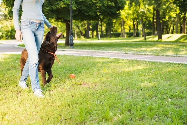 Seção baixa, vista, de, um, mulher caminhando, com, dela, cão, em, jardim