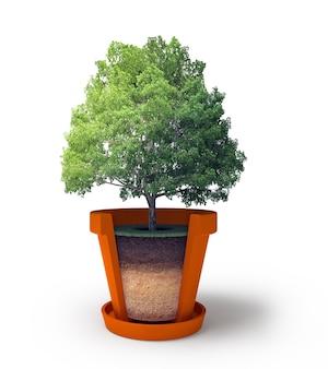 Seção do vaso com árvore bonsai