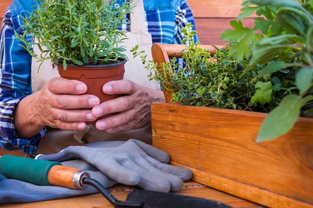 Seção intermediária de uma mulher idosa jardinagem com vaso de ervas em dia de verão - conceito de jardim doméstico