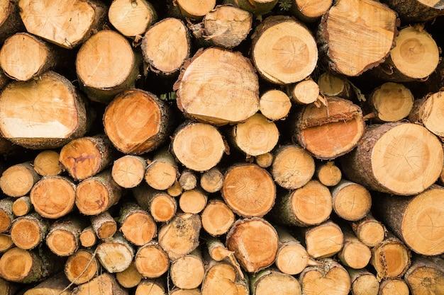 Seção transversal da pilha de lenha de árvores cortadas de madeira para o fundo