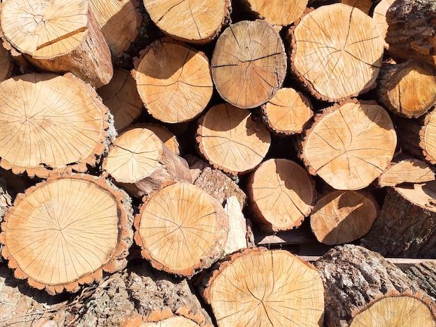Seção transversal de fundo de troncos de árvore, corte de troncos de árvore para decoração de interior plano de fundo ...